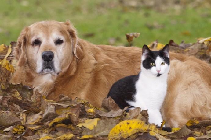 neue Hunde & Katzen