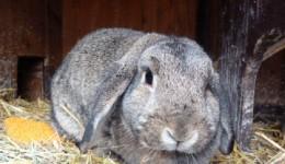 Wilma (7)