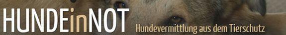 hunde-in-not.com
